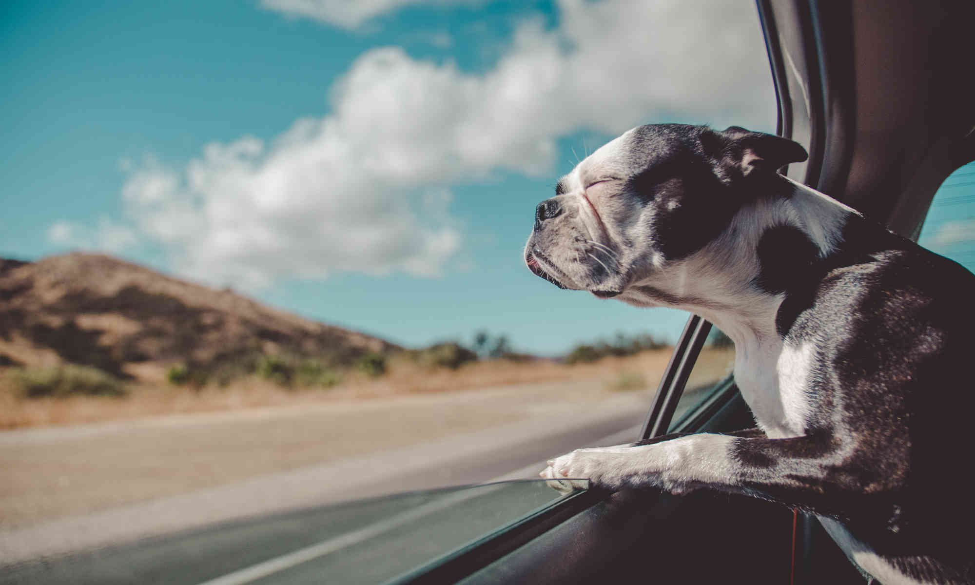 dog-on-the-road