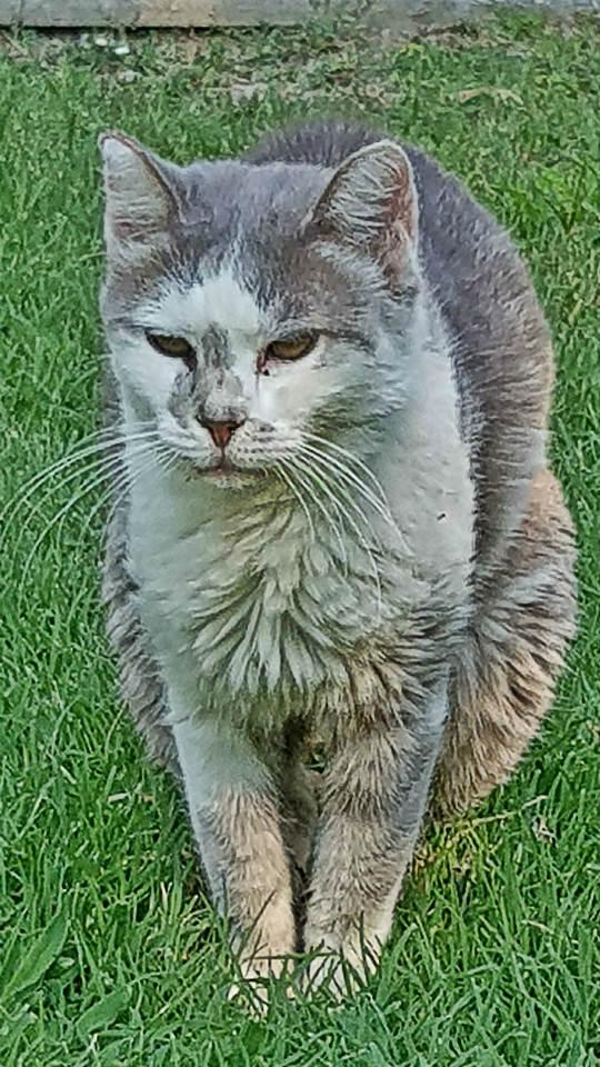 grande gatto e Chanel dating radioattivi che datono rocce ignee