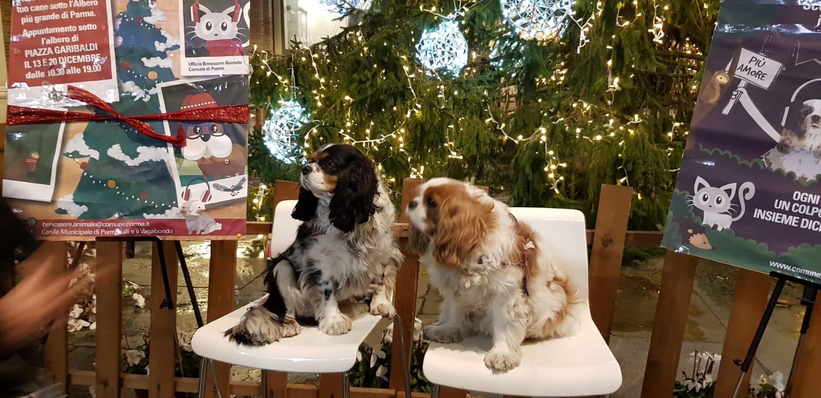 Cani-sotto-albero