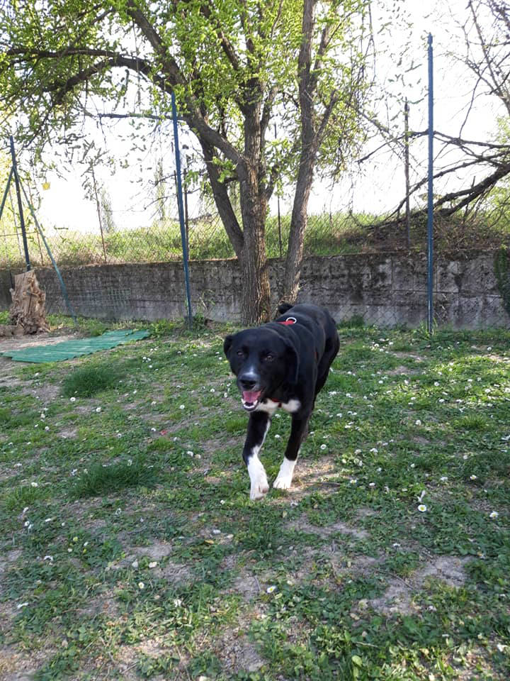 Cani in adozione Parma - Sasha