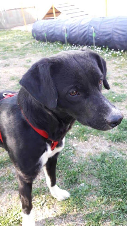 cani in adozione Parma - sasha - 2