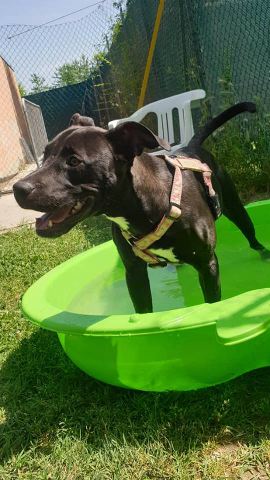 Molla-cane-in-adozione-canile-Parma