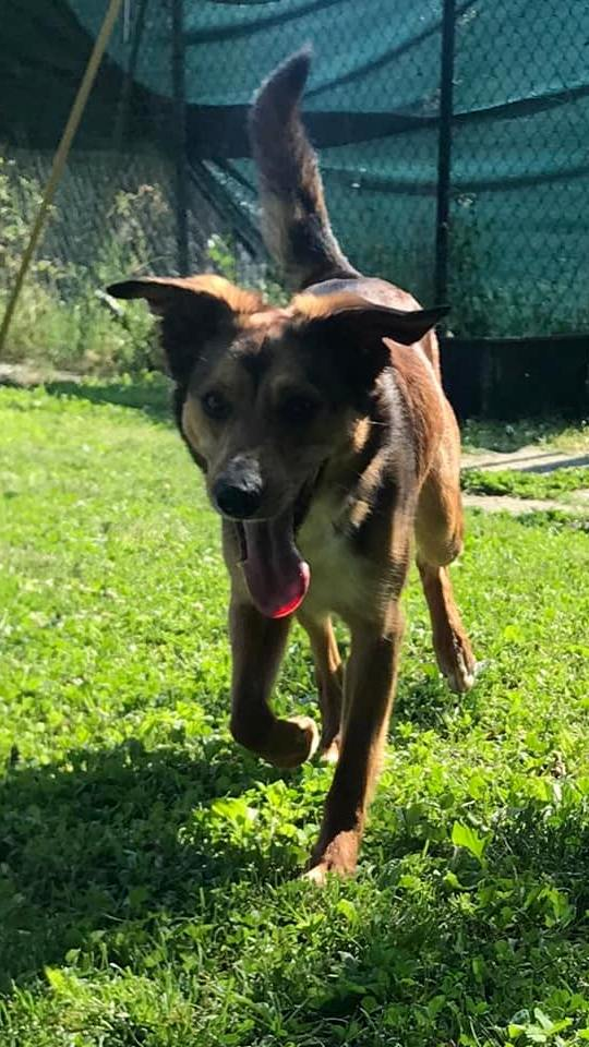 Francesco-cani-adozione-Parma