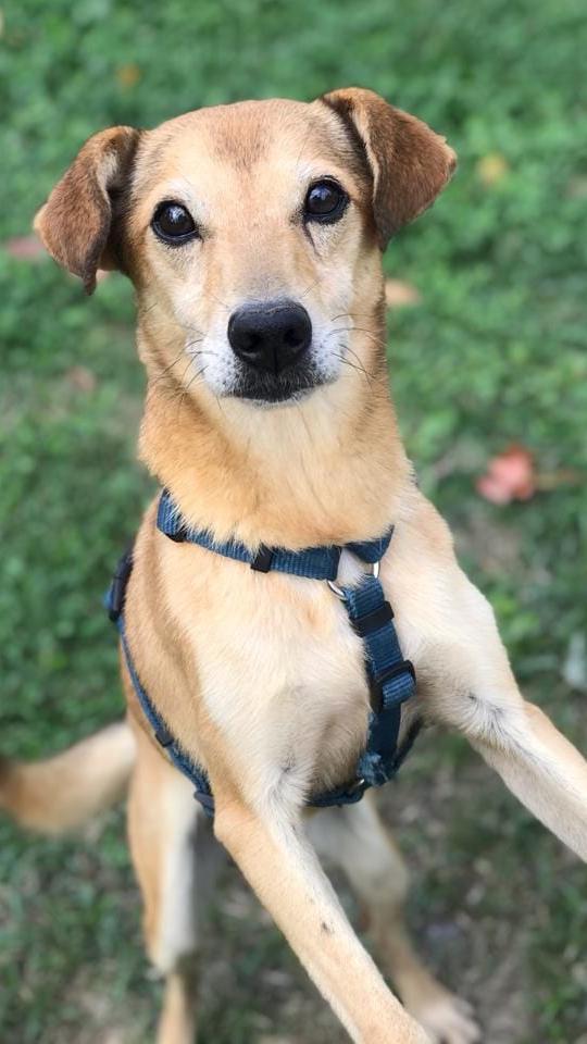 flipper cani adozione Parma