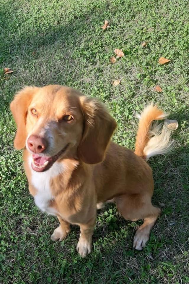 Lucchino - cani in adozione Parma