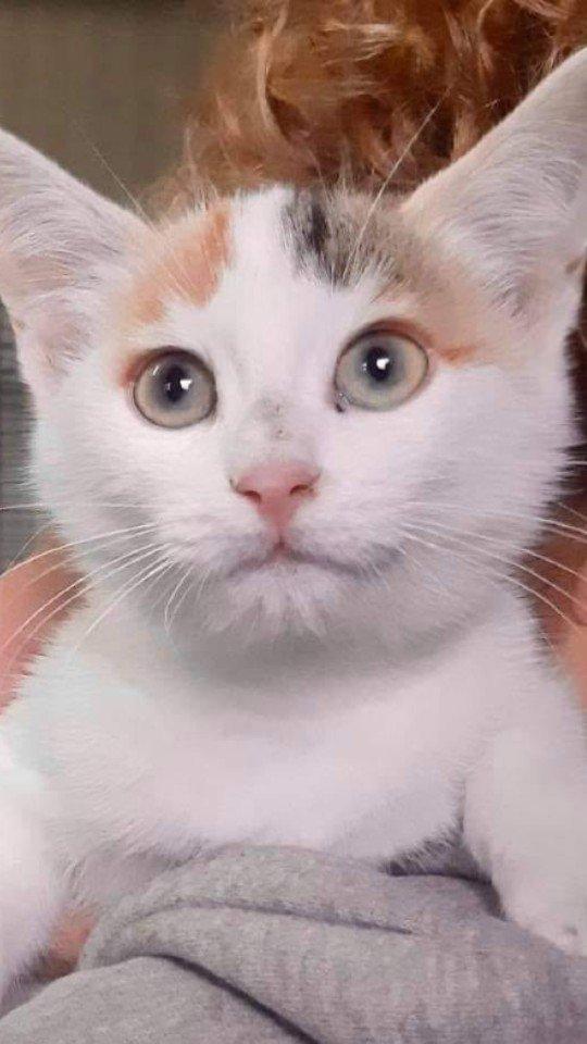 sogliola- gatti in adozione Parma